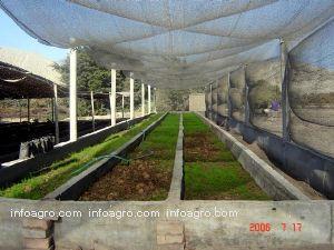 Fundo organico lagartija sac datos de contacto y detalles for Vivero organico